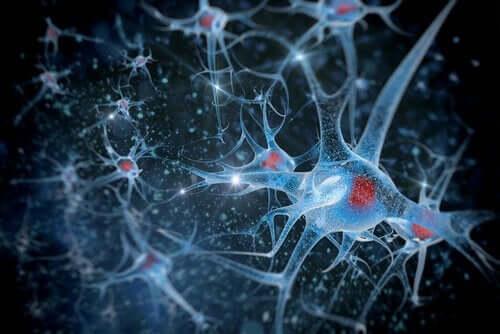 De hersenen en biopsychologische onderzoeksmethoden