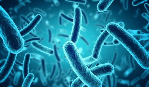 Afbeelding van uitvergrote bacteriën