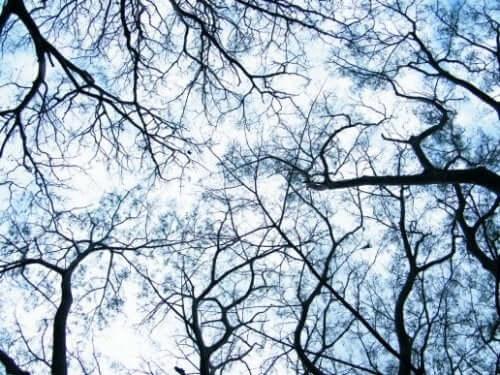 Dendrieten: een neurowetenschappelijke revolutie