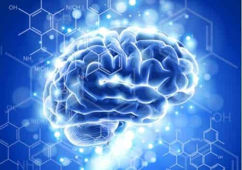 De kenmerken en ontwikkeling van de neuro-ethiek