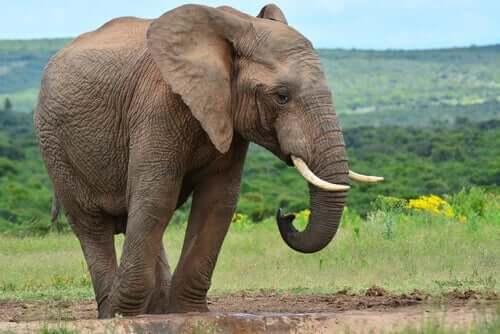 Het verhaal van de zes blinde wijzen en de olifant