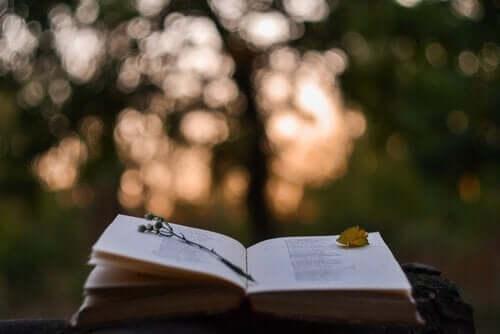 Open boek buiten in de natuur