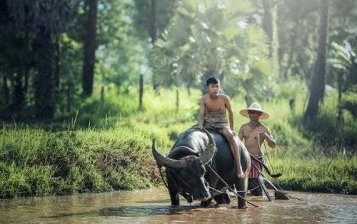 Twee mensen rijden op een stier