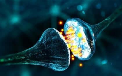 Uitvergroot beeld van een synaps