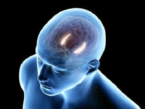 De verbindingen in de hippocampus