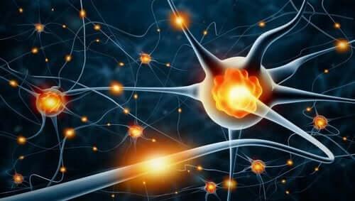 Een afbeelding van neuronen