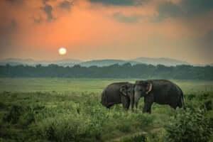 De verdrietige olifanten: een waargebeurd verhaal