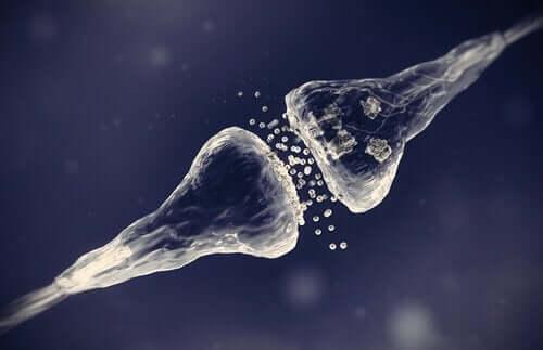 Afbeelding van een synaps