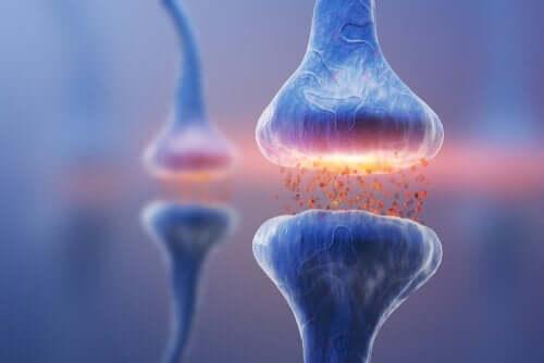 Soorten synapsen: neurale communicatie