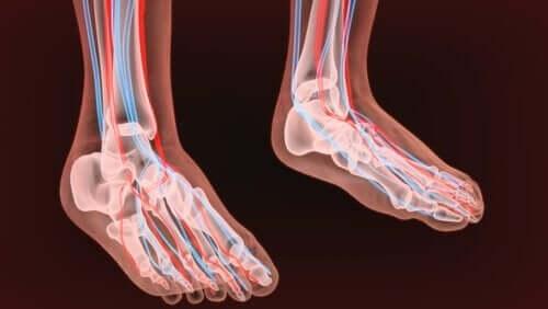 Afbeelding van de doorsnede van twee voeten