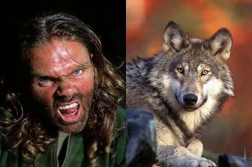 De foto van Ellis naast die van een wolf