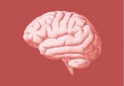 De neurobiologie van verslaving tijdens de anticipatiefase
