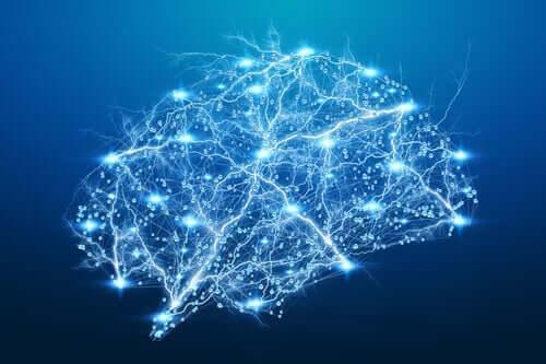 Marcelo Ceberio over neuroplasticiteit