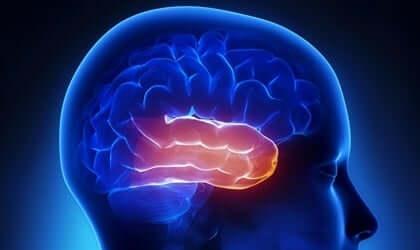 Een afbeelding van de dwarsdoorsnede van de hersenen