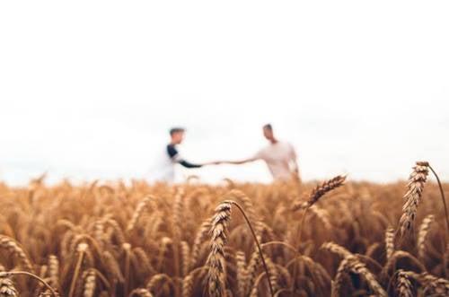 Twee mannen in een korenveld