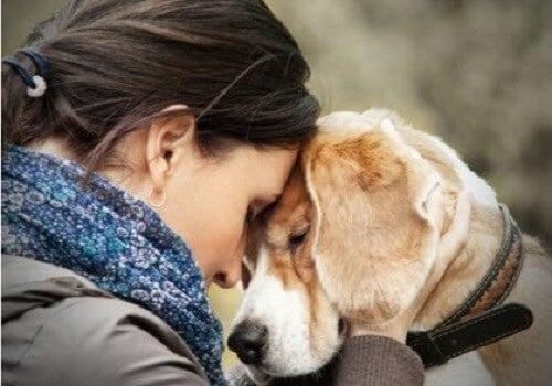 Huisdieren geven jou emotionele bevestiging