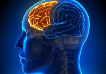 Dysexecutief syndroom: wanneer de frontale kwab faalt
