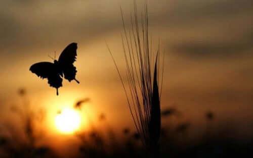 Het silhouette van een vlinder