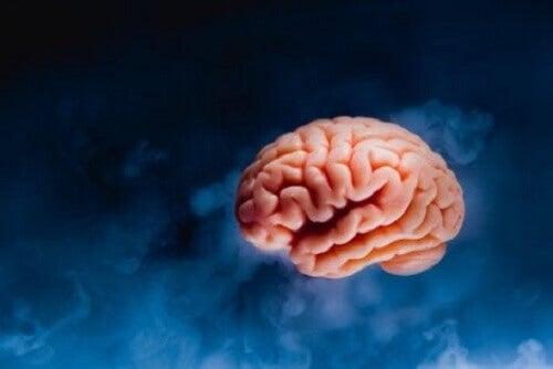 De rol van de hersenen in aantrekking