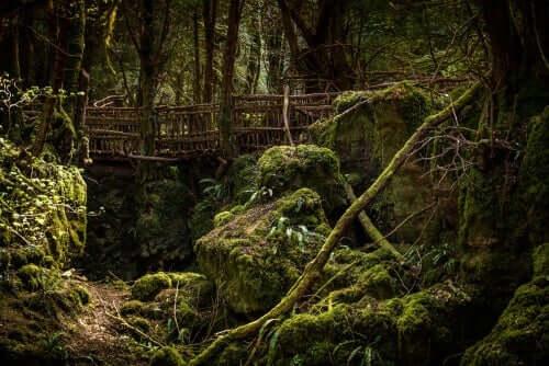 Het bos van Merlijn
