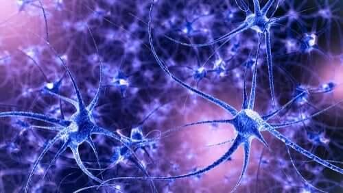 Hersenplasticiteit: kenmerken en soorten