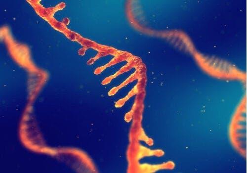 RNA in het lichaam