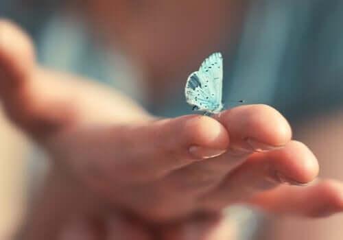 Je kunt veranderen zoals een vlinder dat doet