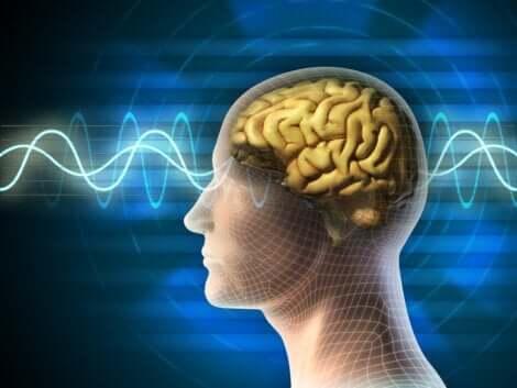Verschillende hersengolven tijdens de slaapcycli