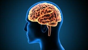 We vertellen je alles over de gyrus cinguli