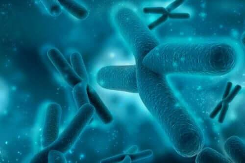 Het X-chromosoom en het 17e chromosoom hebben invloed op deze aandoening