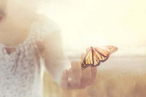 Een vlinder op een hand