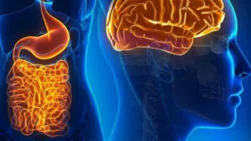 Het fascinerende leven van darmneuronen