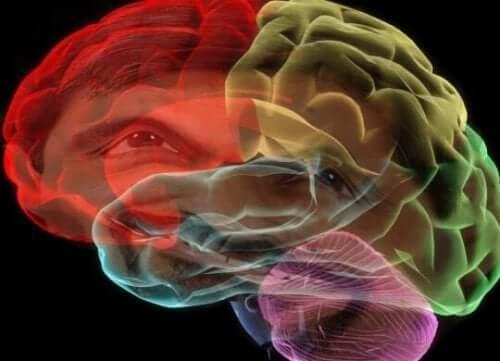 Een afbeelding van de hersenen in kleuren