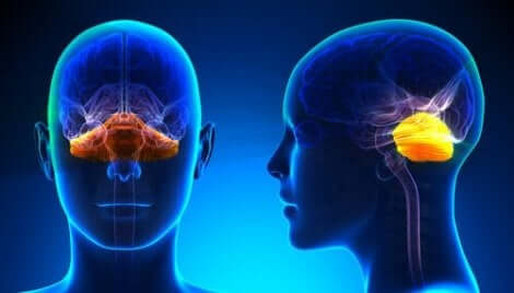 Een vooraanzicht en zijaanzicht van een hoofd met hersenen