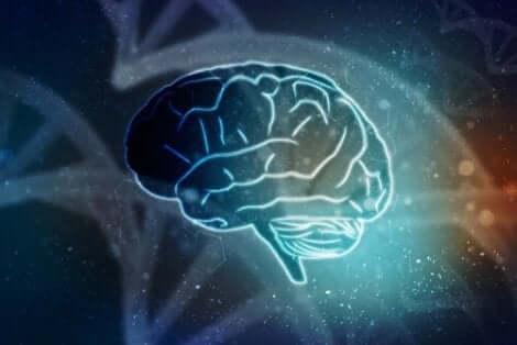 Een tekening van de hersenen