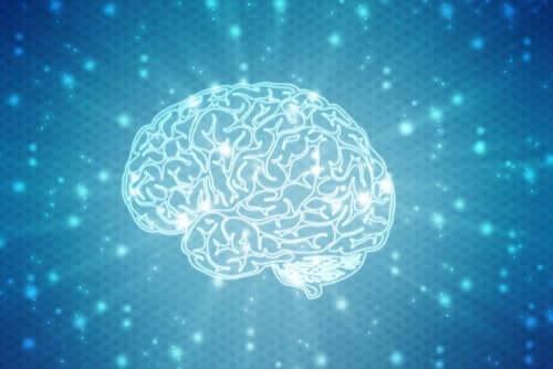 Wat zijn neuromythen precies?