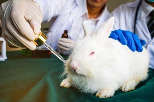 Een konijn in een laboratorium krijgt een middel toegediend