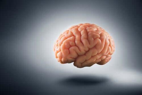 Hoe armoede het menselijk brein verandert