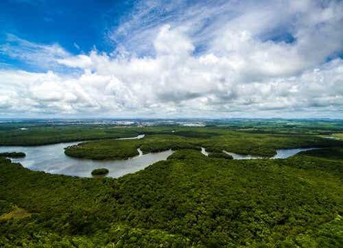 Het amazone-gebeid in Brazilië