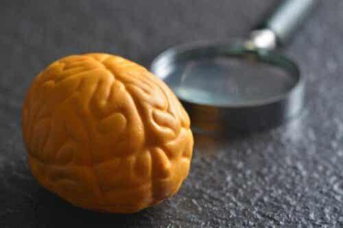 Waarom heeft het brein twee hersenhelften?