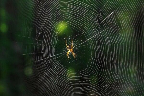 Wat betekent het als je over spinnen droomt?